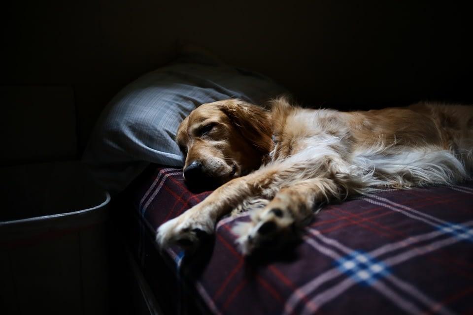 Зимняя усталость, <br>или «Снова на работу»