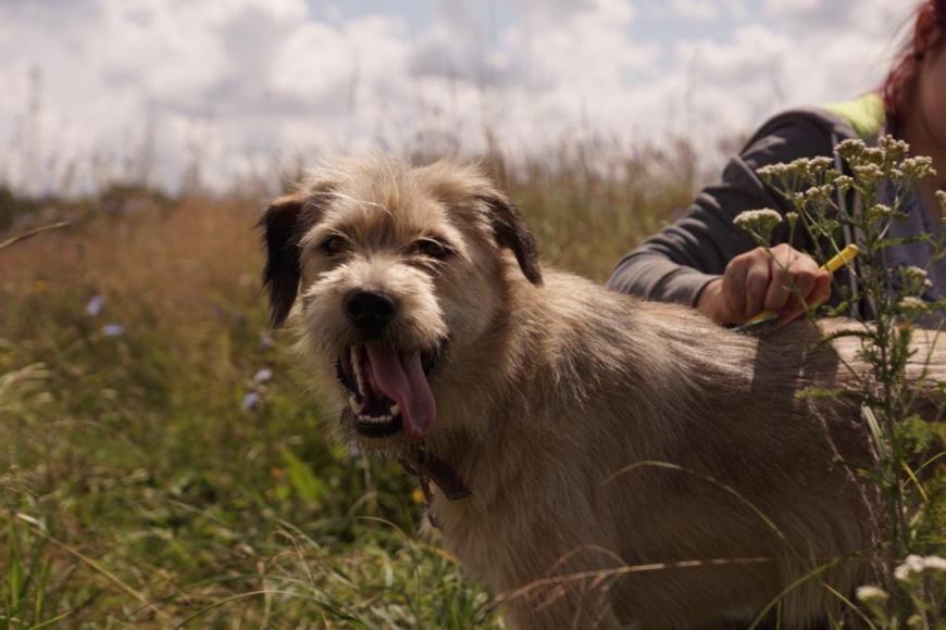 Зооволонтёрство: помощь животным продолжается