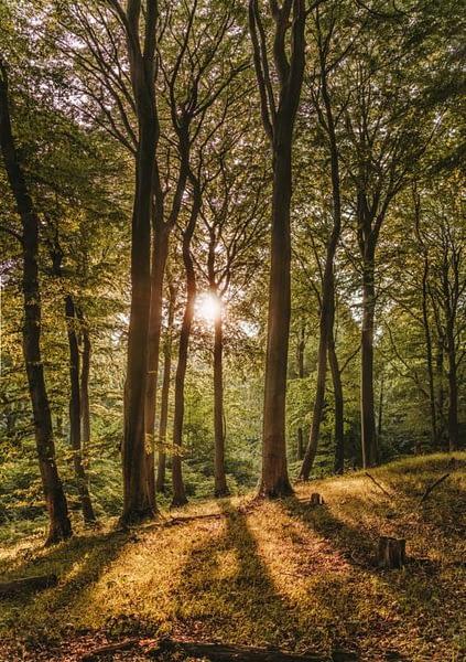 Лес, каким мы его хотим видеть.