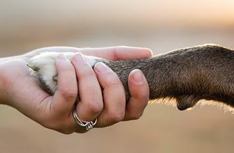 Как и зачем саентологический доброволец оказывает помощь собакам